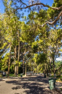 Phoenix Homestead Historic Trees