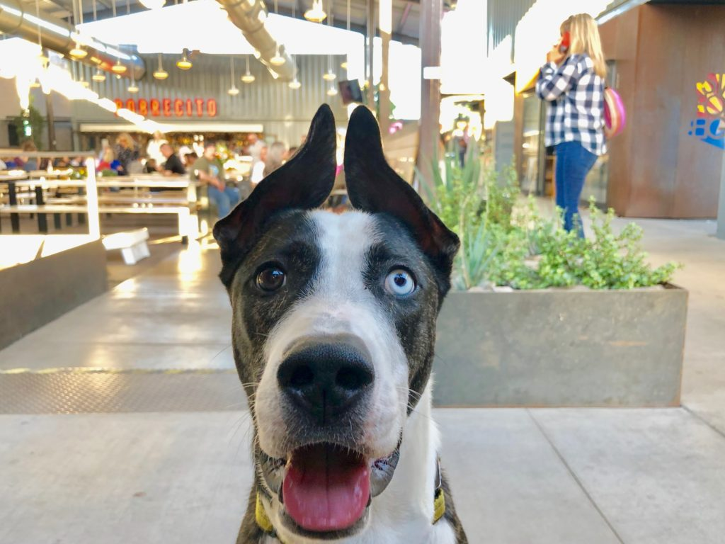 Downtown Phoenix Dog Friendly